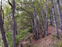 rila i krastova gora (359 of 435).jpg