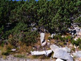 rila i krastova gora (17 of 435).jpg