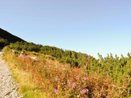 rila i krastova gora (260 of 435).jpg
