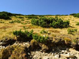 rila i krastova gora (29 of 435).jpg